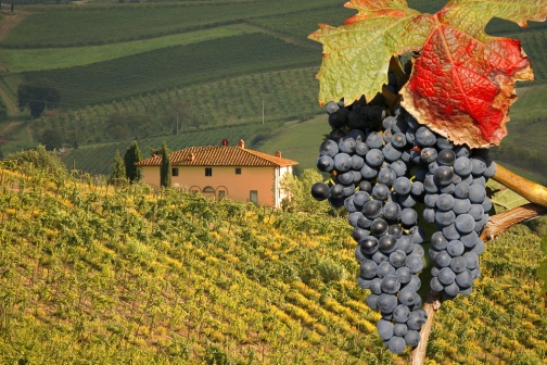 Vineyeard-in-Chianti-Tuscany-Italy-famous-landscape